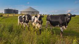 id8energy-decarbonization-cows